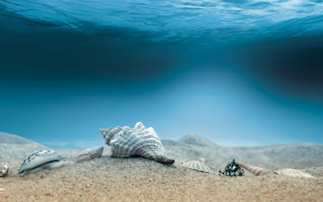 Framed Print - Seashells on the Seabed (Picture Poster Art Ocean Shell Sea Wave)
