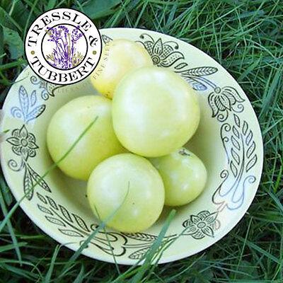 RARE White Tomato, Giraffe 10 seeds  UK SELLER