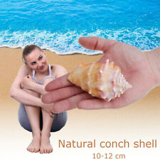 Natural Large Sea Shell Home Decor Conch Centerpiece Collectible 22cm Craft EWS