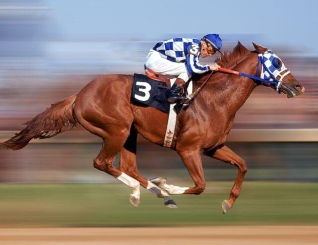 SECRETARIAT 1973 PREAKNESS TRIPLE CROWN HORSE RACE 8X10 PHOTO PICTURE HISTORY #1