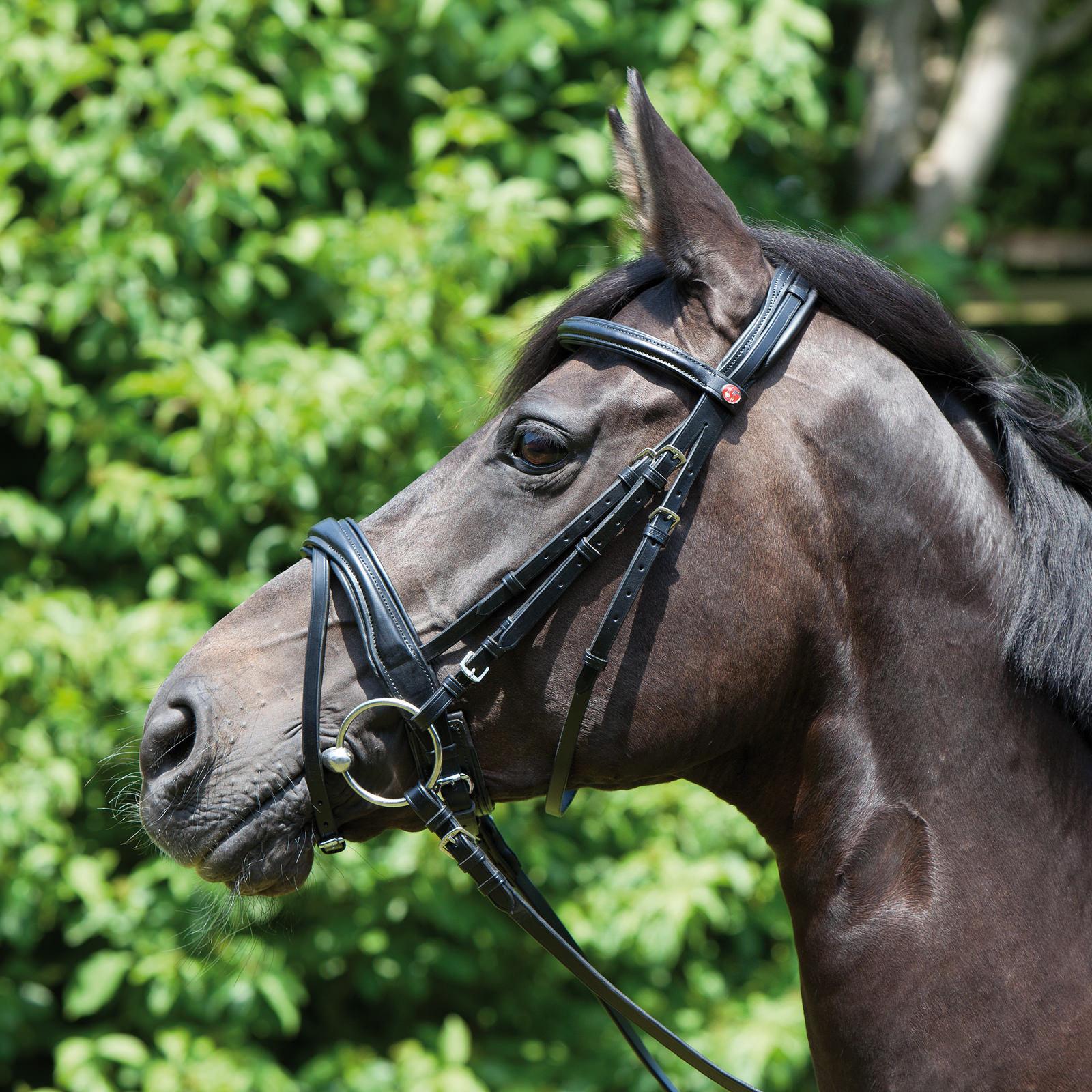 Kieffer Trensenzaum Perseus, black, englisch-kombiniertes Reithalfter mit Züge
