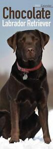 Labrador-Retriever-Chocolate-2020-Official-Slim-Wall-Calendar