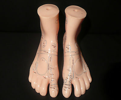 18cm Human Feet Acupuncture Massage Model - Anatomical Medical Foot Anatomy