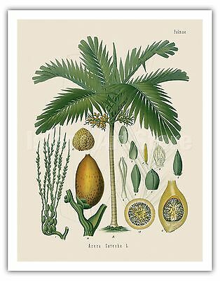 Walnut Botanical Print Tree Decor Vintage Wall Art Picture Poster Gift