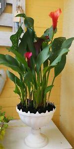Trophy-Vase-Amphora-Metal-White-Shabby-Vintage-Landhaus-Garden-Decoration-19cm