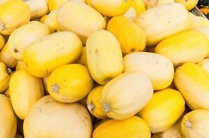 Squash-Winter-Spaghetti-Non-GMO-Heirloom-Garden-Vegetable-Seeds-Sow-No-GMO-USA