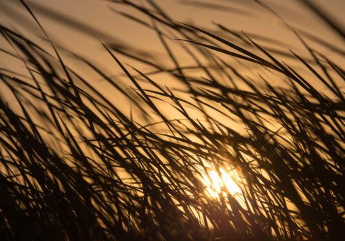Fototapete Vlies bei Sonnenuntergang Tapeten Fototapeten Fürs Wohnzimmer FDB96