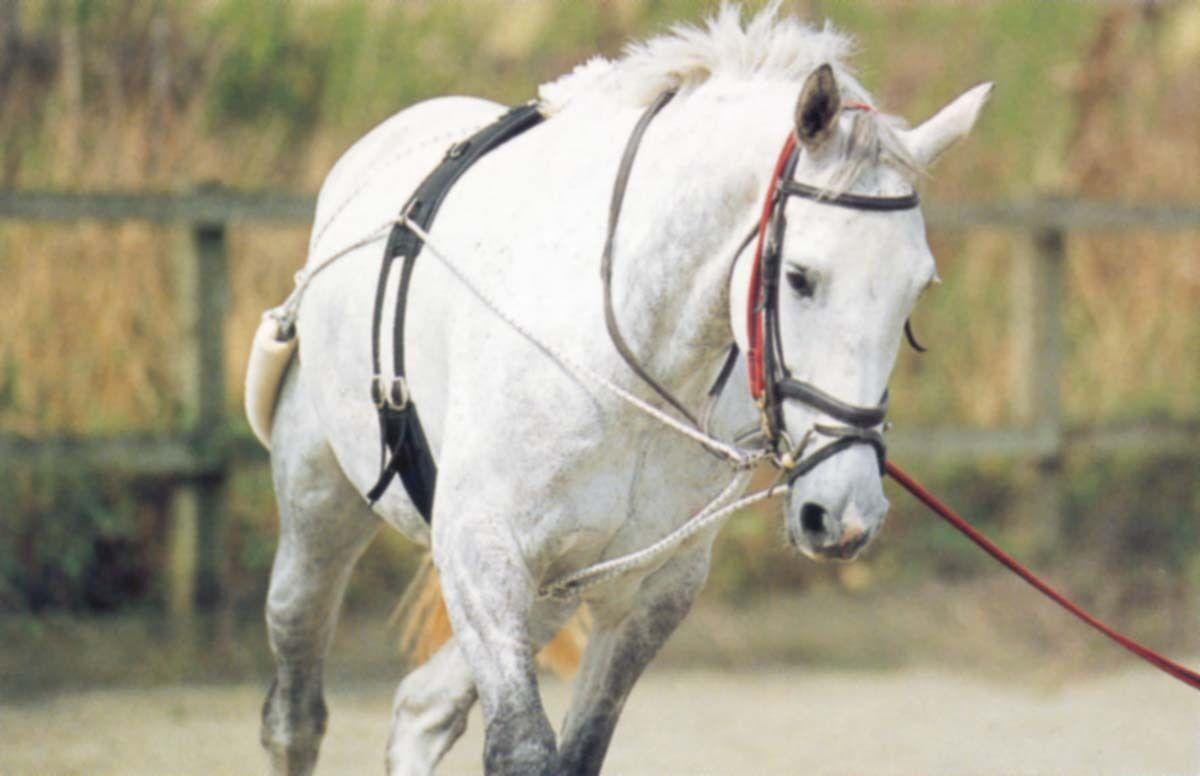 Eldorado - PESSOA Longentrainingssytem Training Longieren
