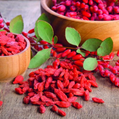 Goji Berry Fruit Shrubs Garden Plants Hardy Deciduous /'Synthia/' 1 x 9cm Pot T/&M