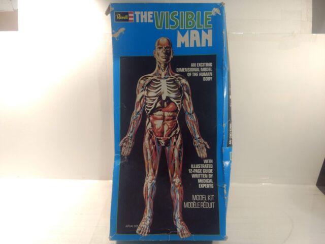 Vintage 1977 Revell The Visible Man Anatomy Model Kit Gm732 Ebay