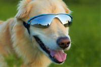 K9 Optix Rubber Frame Eye Protection Doggles Sunglasses Uv