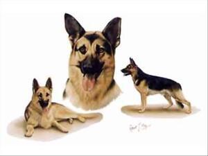 German shepherd group dog robert may art greeting card set of 6 ebay image is loading german shepherd group dog robert may art greeting m4hsunfo