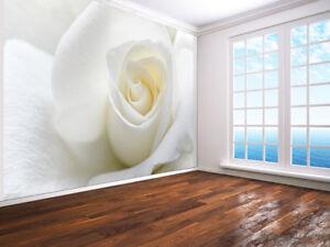 Carta Da Parati Rosa Bianca : Rosa bianca con morbido petali primo piano foto carta da parati