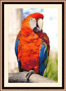 Red-Parrot-Exclusive-Cross-Stitch-Kit