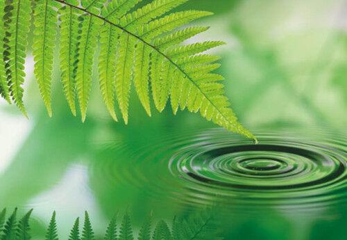 Fototapete SILENCE 254x184 Natur Farn Wasser Blatt ruhiges Feng Shui grüne Ruhe