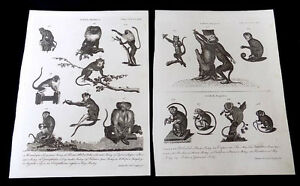 Image is loading 2-Antique-Book-Plates-Monkey-Species-Andrew-Bell-  sc 1 st  eBay & 2 Antique Book Plates Monkey Species Andrew Bell 1726-1809 | eBay