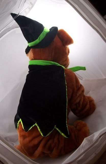 Witch Doggy costume dog pet clothes Halloween outfit witchy black and green
