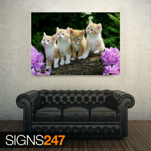 3623 Curieux chatons Animal Poster-Photo Poster print ART A0 A1 A2 A3 A4