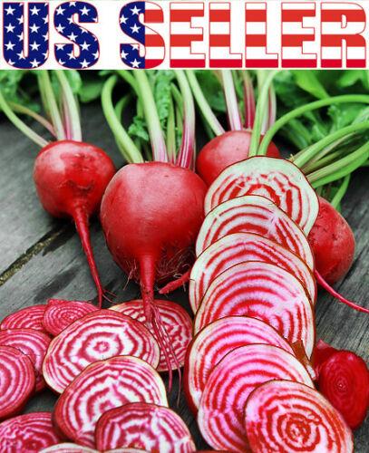 50 ORGANICALLY GROWN Chioggia Beet Seeds Candy Stripe Heirloom NON-GMO Italian