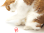 thumbnail 11 - Twizlrz-Durable-Colour-Bouncing-Interactive-Pink-Orange-Blue-Cat-Toy-Toys