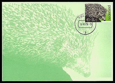 Briefmarken Niederlande Mk 1976 Fauna Igel Hedgehog Maximumkarte Maximum Card Mc Cm Bv48 Gut Verkaufen Auf Der Ganzen Welt
