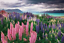 Lupine 20 Seeds Lupinus Polyphyllus Russell Mix Perennial Plant