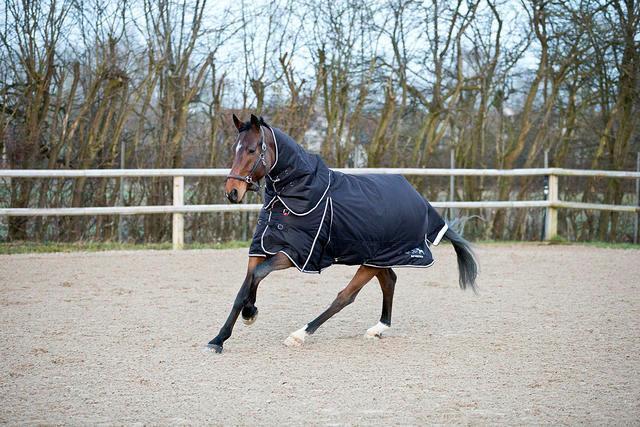 B verdeigo Georgina Manta de peso medio caballo Cuello Desmontable - 250gm DK Azul