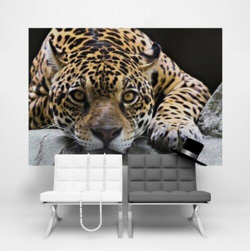 Wall mural wallpaper for living room Wild life Jaguar black orange kids photo
