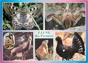Animals-Postcard-Pyrenees-fauna
