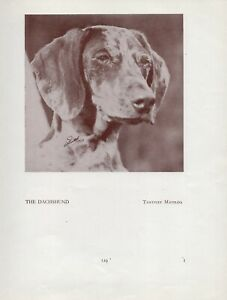 DACHSHUND OLD VINTAGE 1934 NAMED DOG PRINT PAGE