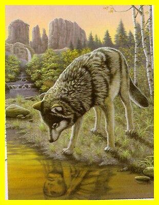 Malen nach Zahlen Wolf in der Prärie  Tiermotiv NEU ! Größe 22 cm x 29 cm