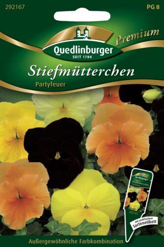 Quedlinburger-Pansé Party Fuoco