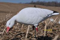 Avery Greenhead Gear Ghg Pg Snow Goose Decoys Harvester Pack Dozen on sale
