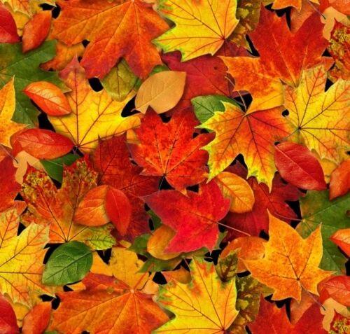 Landscape Medley Fabric Small Autumn Leaves 478 Multi Elizabeth Studio YARD