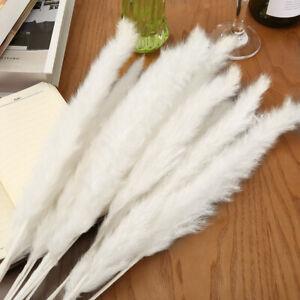 15Pcs-Set-Natural-Dried-Pampas-Grass-Reed-Home-Wedding-Flower-Bunch-Decor