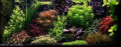 Aquascaping Tropical Plant Beginner Bundle Aquatic Fish Easy Plants For Beginner Ebay