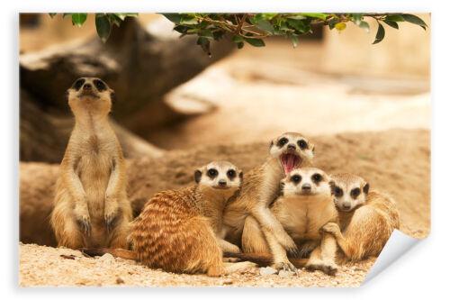 Erdmännchen Tier Familie Afrika Madagaskar Postereck 3248 Poster /& Leinwand
