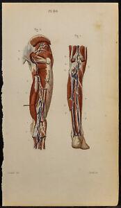 1846-Planche-anatomie-Angiologie-Vaisseaux-et-ganglions-pied-et-jambe