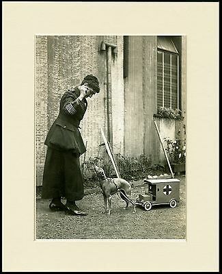ITALIAN GREYHOUND LADY AND RED CROSS COLLECTING DOG MOUNTED PRINT READY TO FRAME