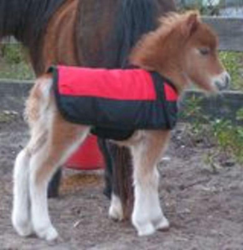 Miniature Horse  Burro Recién Nacido Impermeable Manta