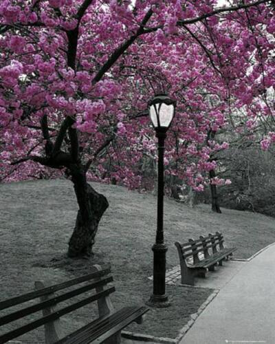 Blossom Mini Poster 40cm x 50cm new and sealed New York Park