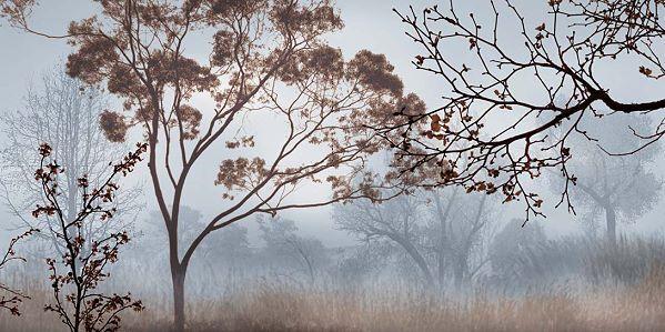John Seba   All'Inizio Morning Nebbia, II Stampa da Appendere 50x100