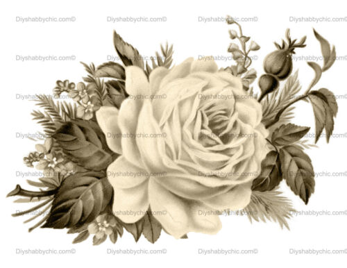 Furniture Decal Image Transfer Vintage Rose Sepia Flower Upcycle Shabby Chic Diy