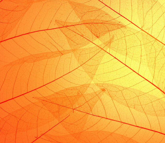 Clear Leaf Veins 1 Wall Paper Wall Print Decal Wall Deco Indoor wall Murals Wall