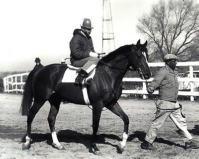 NORTHERN DANCER 1960'S HORSE RACING 8X10 PHOTO - ONE OF THE BEST EVER TO RACE!