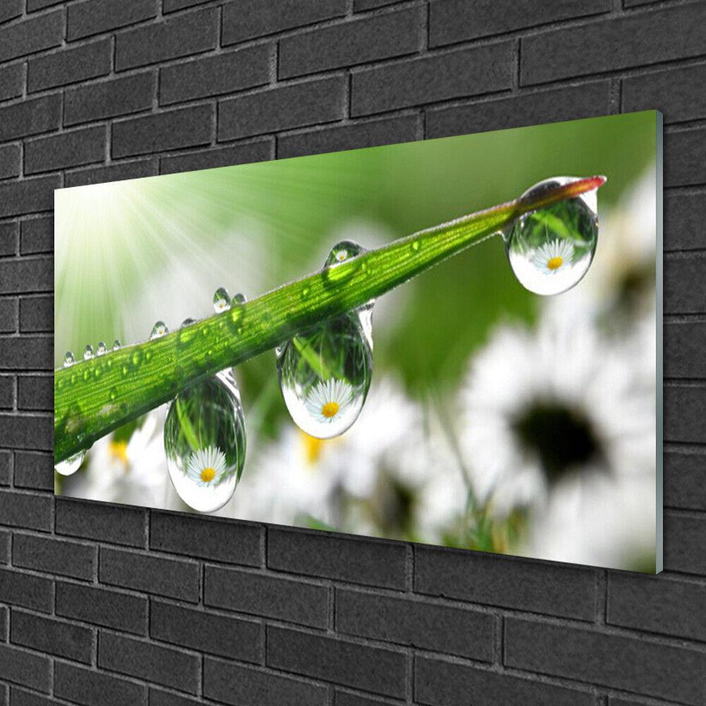 Image sur verre Tableau Impression 100x50 Nature Rosée
