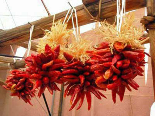 Chimayo Chile Hot Peppers for great powder 10 seeds