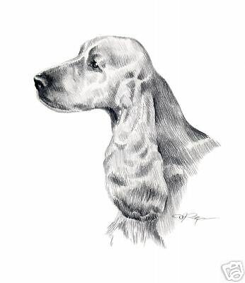 ENGLISH COCKER SPANIEL Pencil Dog 8 x 10 ART Print by Artist DJR