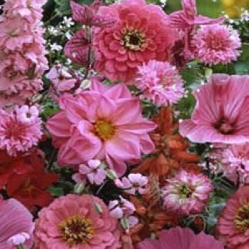 500 Seeds Pink Wildflower Mix Wild Flower