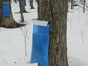 250 Maple Sap / Syrup Bags For Sap Sack Holders 1 Full Case